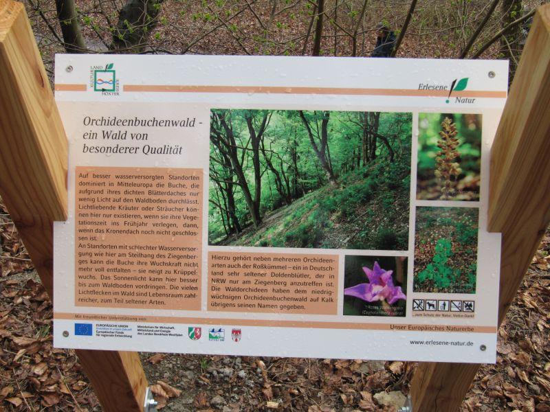 Naturerlebnispfad Orchideenbuchenwald