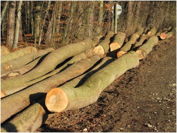 Göttinger Eschen-Holz vor der Abreise nach China. Seit China seine Wälder besser schützt, importiert es den Rohstoff Holz von überall. Ein Teil kommt als Konsumgüter wieder zurück. Die Transportkosten sind vielfach subventioniert, ökologisch ist das nicht.