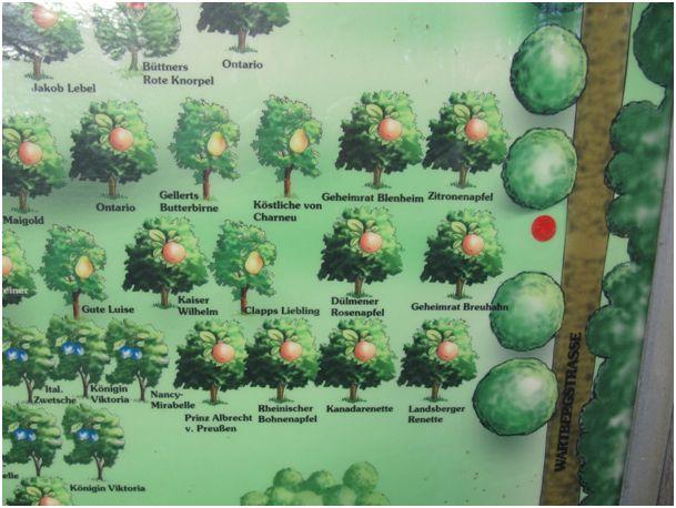 Die Orientierungskarte zum Probieren der Obstsorten