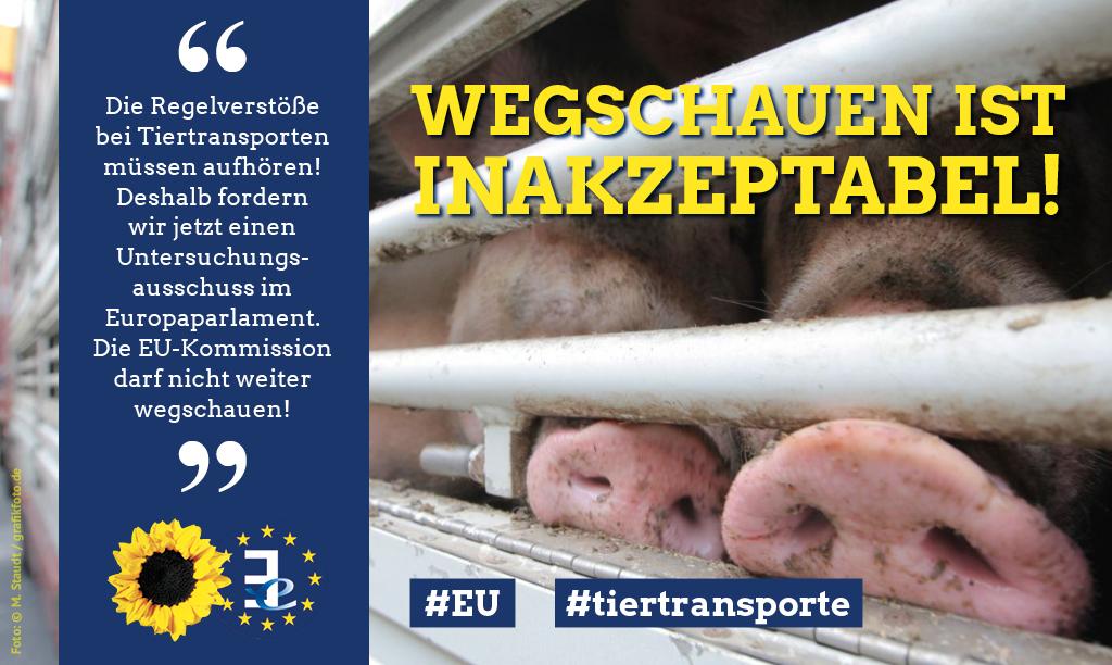 Tiertransporte: Große Koalition im Europaparlament will Untersuchungsausschuss verhindern - Wir Grüne klagen. - Sven Giegold - Mitglied der Grünen Fraktion im Europaparlament