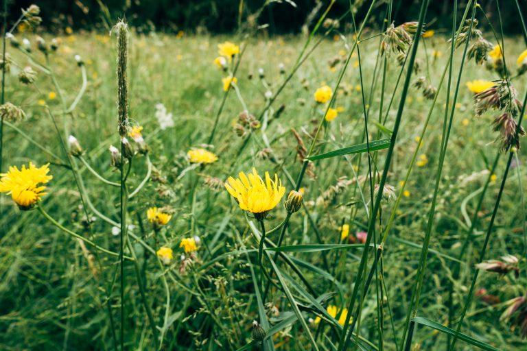 Natur Natura2000, Blumen, Wiese, Artenvielfalt. Biodiv